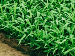 tarım sektoru